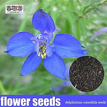 100 Stücke Delphinium Consolida Samen, Garten