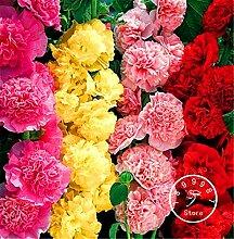 100 Stücke / Los Neue Ankunft! Doppel Malve Blumensamen Mix / Staudengarten-Dekoration Bonsai Blumensamen