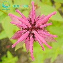 100 Stücke viel Mint Samen Gemüse Grüner Balkon Topfpflanzen Pfefferminz Aromatische Staude blühende Pflanze DIY Hausgarten