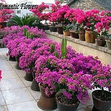 100 / Tasche Lila Blätter-Blumensamen,
