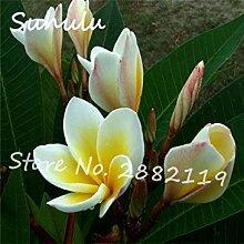 100 Teilchen selten schöne Blumensamen