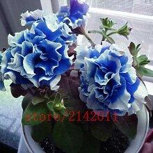 100 Teile/beutel Blue Petunia Samen, Blumen