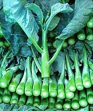 1000x Chinese Kale Kailaan Chinese Broccoli GAI