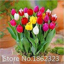 . 100pc Blume Exotische Zimmerpflanze Sonnenblume