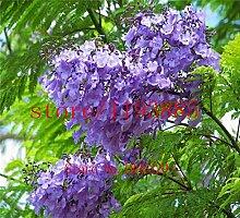 100pcs / bag Blau Lila Palisanderholzbaum Baum Strauch, Baumsamen, Bonsai-Blumensamen, Pflanze für Hausgarten