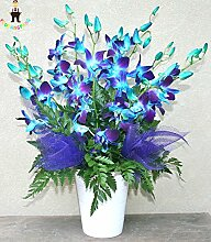 100pcs / bag Blau Orhid Samen