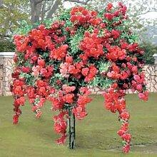 100pcs / bag Blume Rose Rosenbaumklettern Samen