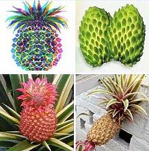 100pcs / bag Multi-Color Seltene Ananas Samen Fruchtsamen für Garten Balkon Bonsai Pflanze