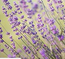 100pcs / bag Provence Lavendel Samen lila Lavandula Vanille Samen duftend organischen Lavendel Samen Pflanze Blume Hausgarten 2