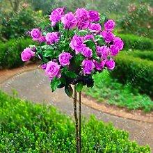 100pcs / bag Rosenbaum, rosafarbene Samen Bonsai Blumensamen Exotische Samen Gartendeko Topfpflanze für Hausgarten 8