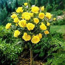 100pcs / bag Rosenbaum, rosafarbene Samen Bonsai Blumensamen Exotische Samen Gartendeko Topfpflanze für den Heimgarten 3