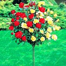 100pcs / bag Rosenbaum, rosafarbene Samen Bonsai Blumensamen Exotische Samen Gartendeko Topfpflanze für 13 Hausgarten