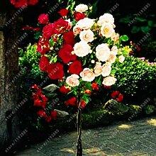100pcs / bag Rosenbaum, rosafarbene Samen Bonsai Blumensamen Exotische Samen Gartendeko Topfpflanze für 14 Hausgarten