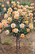 100pcs / bag Rosenbaum, rosafarbene Samen Bonsai Blumensamen Exotische Samen Gartendeko Topfpflanze für den Heimgarten 4