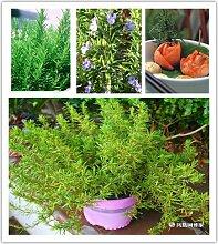 100pcs / bag Rosmarin Samen Diy Garten Bonsai Pflanze Leicht Kraut wachsen, Gemüsesamen Gesunde
