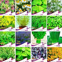 100pcs / bag Rosmarin Samen Diy Garten Bonsai