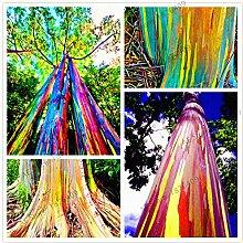 100pcs/bag seltene Regenbogen-Eukalyptus-Samen,