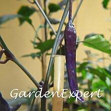 100pcs Buena Mulata Lila Pepper Samen Hot Pepper Samen Seltene Chili Pepper Samen Gemüse Hausgarten Bonsai Samen Pflanze