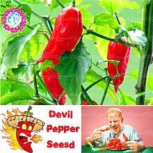 100pcs heiße Gemüsesamen Habanero Chili Pflanze extrem heiß für BBQ und Steak vom Grill