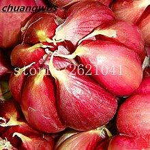 100pcs Knoblauch Samen Rote gesunde Grün Gemüse Bonsai Samen Pflanze Dekoration Sehr leicht wachsen Haus & Garten