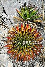 100Pcs Mixed Aloe Samen Exotische Stauden Schöne