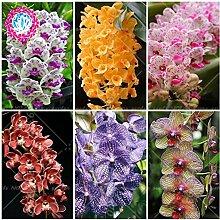 100PCS Orchideensamen Blumensamen für Hausgarten