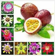 100pcs super rare Passionsblume Samen Topf Bonsai
