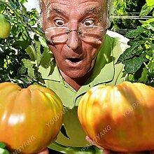 100pcs Tomate sät Chinese Gaint Tomaten-Samen 2017 HOT SALE Haus & Garten pflanzen Freies Verschiffen hohe Keimungsrate Pflanzen Grün