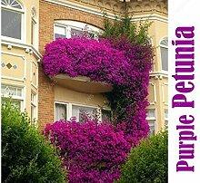 100seeds Topfblumensamen Garten Petunia Hanging