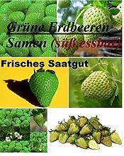 100x Grüne Erdbeeren Samen Saatgut Pflanze Rarität Garten essbar Obst Neuheit #122
