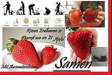 100x Riesen Erdbeeren so groß wie ein Apfel Samen Erdbeersamen Garten Pflanze Rarität essbar Obst #155