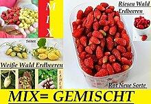 100x Riesen Wald Erdbeeren Gemischt Mix süßer Geschmack Pflanze Rarität essbar Saatgut Garten Samen Obst Neuheit #124