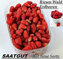 100x Riesen Wald Erdbeeren Rot Samen Saatgut Pflanze Rarität Garten essbar Obst Neuheit #111