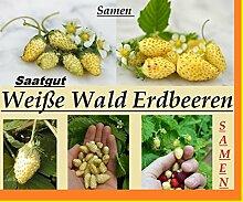 100x Riesen Weiße Wald Erdbeeren Samen Saatgut Pflanze Rarität essbar Garten Obst Neuheit #109