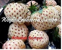 100x Weiße Erdbeeren Ananas Geschmack Saatgut Samen Hingucker Pflanze Obst essbar Garten Neuheit #121