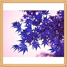 10PC Rare Aqua-Blau-Ahorn-Samen. Die Farbe der