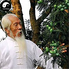 10Pcs Japanese Black Pine Seed Bonsai Garten