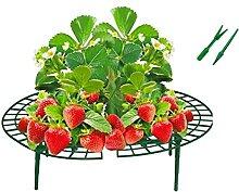 10x Frucht-Reifer Set Erdbeerreifer Erdbeerstütze