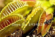 11: 100 Stücke Blau Insektenfressende Pflanze