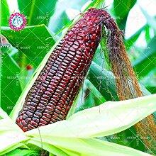 11.11 Große Förderung! 20 PC / Los Schwarz-Mais-Saatgut grünen Gemüsesaatgut in den Garten und zu Hause vergossen aweet frisch einjähriges Kraut Pflanzensamen 1