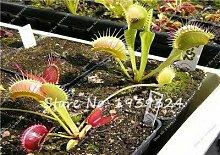 12: 100 Stücke Blau Insektenfressende Pflanze