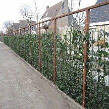 12 Efeu 75-100 cm (Hedera Hibernica): 12 kaufen /10 bezahlen - 12 immergrüne Kletterpflanzen für eine 2 Meter 100% Sichtschutz Hecke | ClematisOnline Kletterpflanzen & Blumen