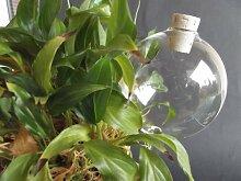 12 Stück, Durstkugel/Bewässerungskugel, 8cm,mit