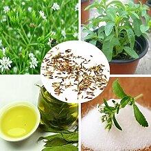 120 Samen Stevia rebaudiana Samen sweetleaf
