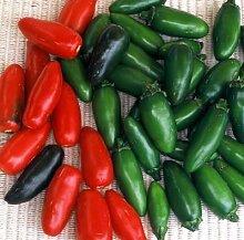 125 Samen von Serrano Chili - Peperoni