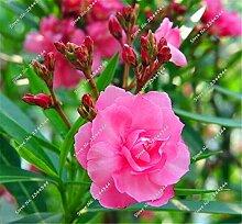 130pcs / bag Seltene Oleander Samen Mehrfarben Blooming Tropical Bonsai Topf Blume Baum Zierpflanze für Gartendeko