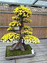 14: 100 Teile/beutel 22 arten Azalee Blumensamen