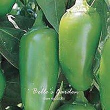 150pcs Cutlass Cayenne-Pfeffer Samen Chili Pepper Samen Gemüsesamen-Hausgarten Bonsai Pflanze DIY