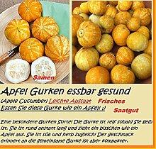 15x Apfel Gurken Samen exotisch Früchte Hingucker Gemüse Pflanze Garten Rarität essbar lecker #183