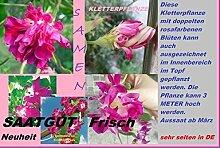 15x Ipomoea nil PINK F1 Blumensamen Kletterpflanze Pflanze Rarität Blumen Garten #171
